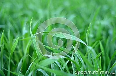 Crops Background