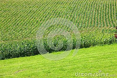 Crops on the farmland