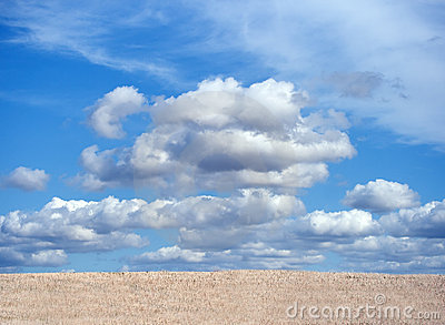 Crops field with blue cloudy sky