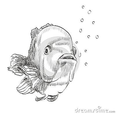 Croquis d 39 un poisson illustration de vecteur image 49451748 - Croquis poisson ...