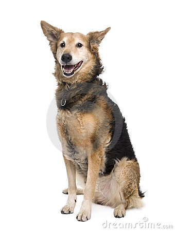 Cross-breed in front of white background