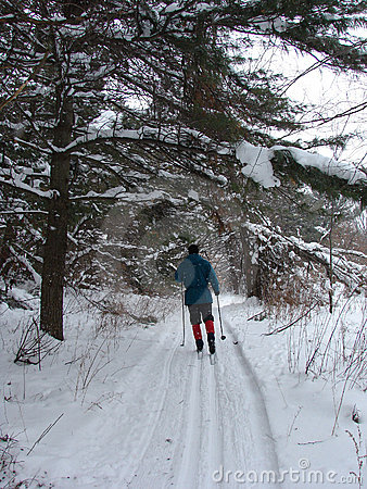 Cross Country Skiing through forest