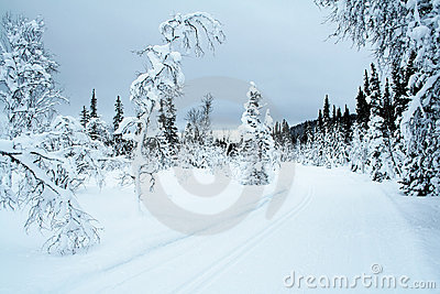 Cross country skiing trail 3