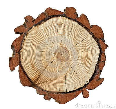 Free Cross-section Of A Tree Trunk Royalty Free Stock Images - 13212949