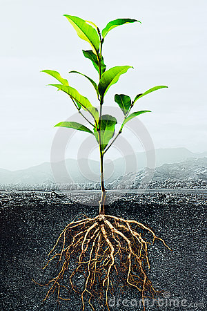 Free Cross Section Of Soil With  A Green Plant Stock Photo - 25863550
