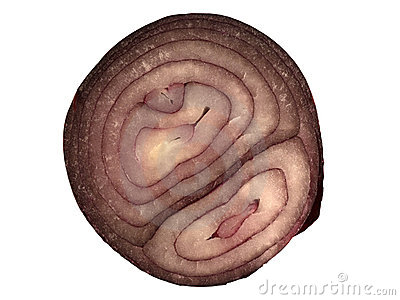 Cross-section of red onion