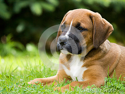 Crossbread hundvalp