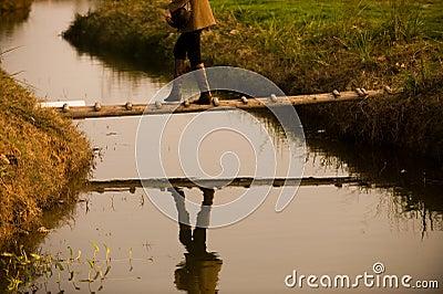 Crossing brook