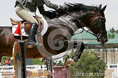 Crossing Hurdles - Equestrian