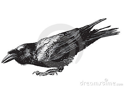Crouching raven