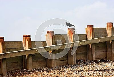 Crow on breakwater