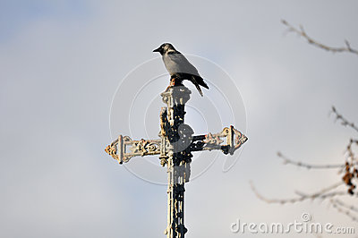 Crow on a Cross