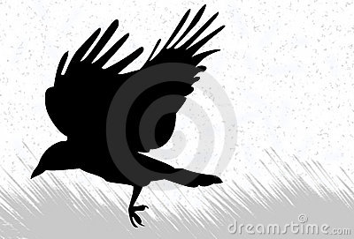 Crow silhouette
