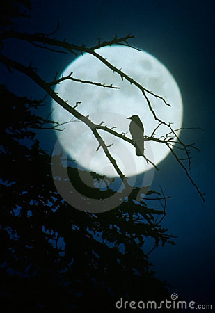 Crow silhouette by moonlight