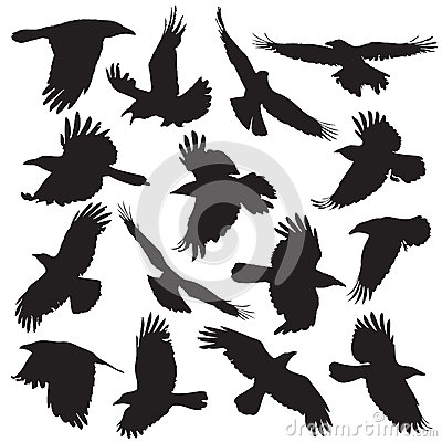 Crow silhouette set 01