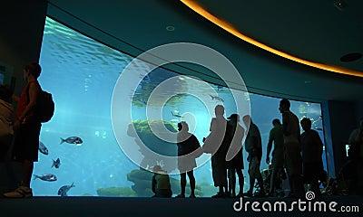 Crowd looking at aquarium