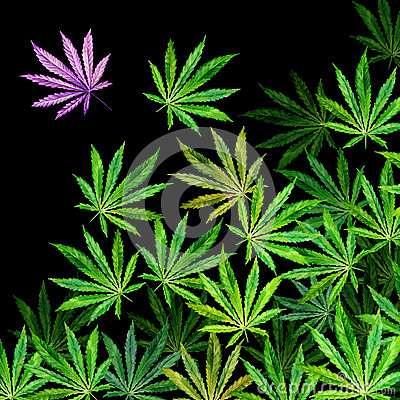 Free Crowd Of Cannabis Leaves On Black Background Royalty Free Stock Images - 85918549