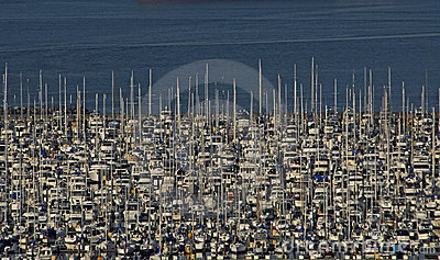 Crowded Sailboat Marina Seattle