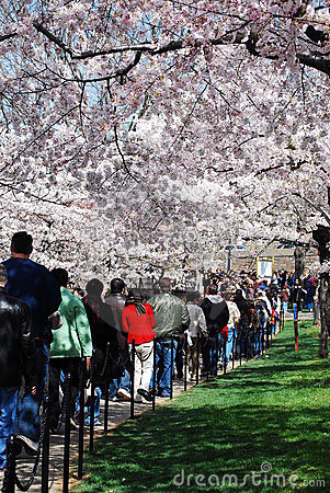 Crowds Enjoy National Cherry Blossom Festival 2008 Editorial Stock Image