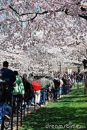 Crowds Enjoy National Cherry Blossom Festival 2008 Editorial Stock Image