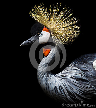 Free Crowned Crane Royalty Free Stock Photography - 60247537