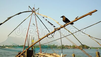 Crows waiting at Chinese fishing nets for new catch in Cochin, Kerala, India. Bird flies in slow motion stock footage