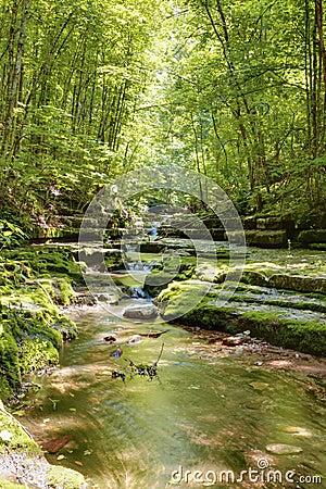 Córrego na floresta