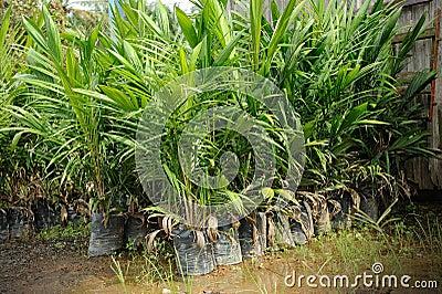 Crude Palm Oil Plant