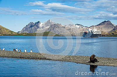 Cruise liner in South Georgia with penguins, seal