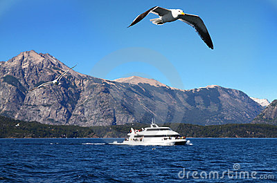 Cruise ship with seagulls