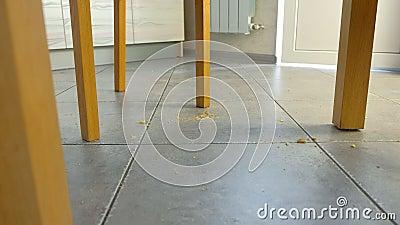 Crumbs πτώση στο πάτωμα στο πλαίσιο του πίνακα r Ρύπος στο πάτωμα κουζινών φιλμ μικρού μήκους