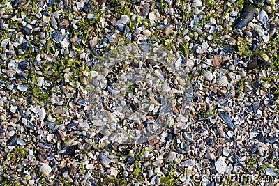 Crushed sea shells background