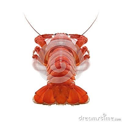 Free Crustacean Royalty Free Stock Image - 9726286