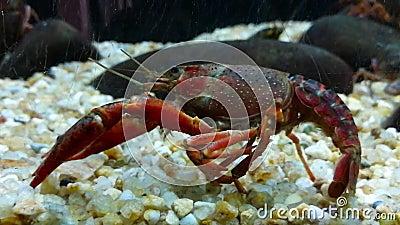 Crustaceans животные беспозвоночных и принадлежат к классу членистоногих сток-видео
