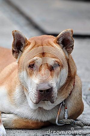 Free Crying Dog Stock Photos - 17068813