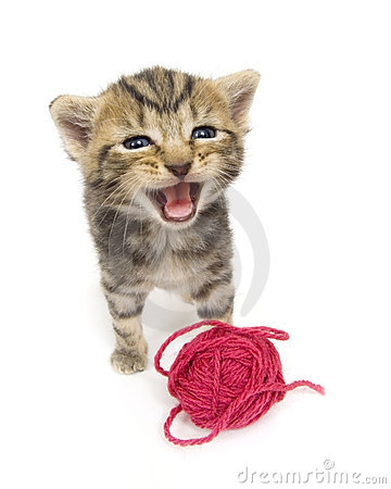 Crying kitten on white background