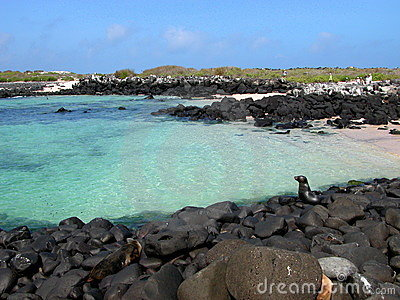 Crystal clear ocean with seals on rocks