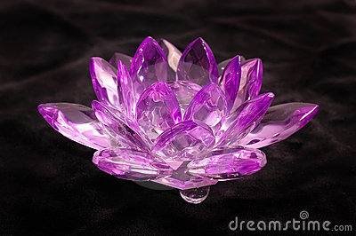 Crystal violet flower on  black velvet
