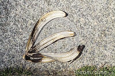 Cáscara del plátano en el pavimento