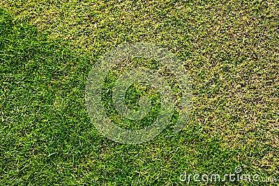 Césped de la hierba