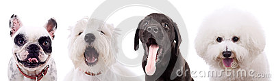 Cuatro perros de perrito sorprendentes