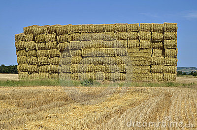 Cube of straw in France