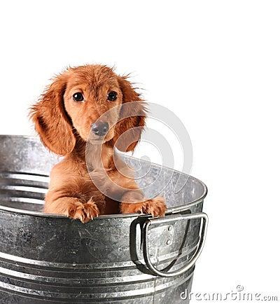 Cucciolo bagnato