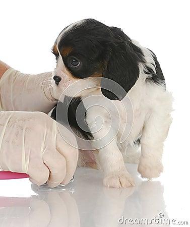 Cuidado veterinario