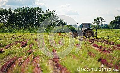 Cultivando a terra