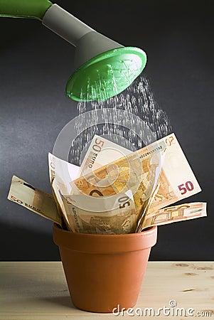 Cultivate Euro