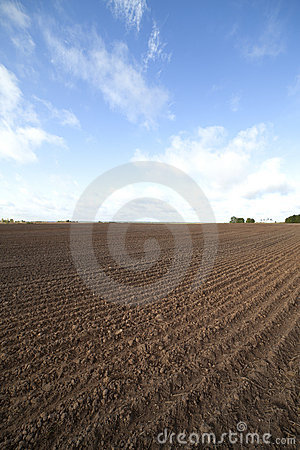 Cultivated field.