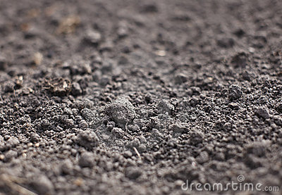 Cultivated gray dried soil