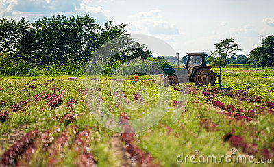 Cultivating Farmland