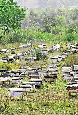 Cultivo de la abeja